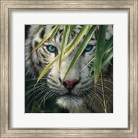 Framed White Tiger Bamboo Forest