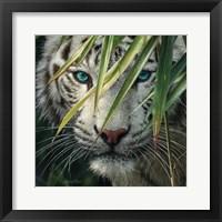 Framed White Tiger Bamboo Forest