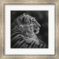 Framed Tiger Mother and Cub - Cherished - B&W