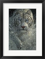 Framed White Tiger - West and Wild