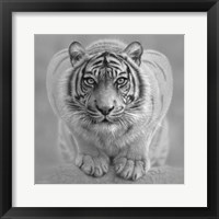 Framed White Tiger - Wild Intentions - B&W