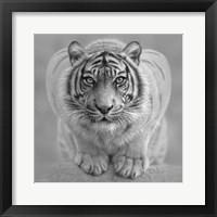 Framed White Tiger - Wild Intentions - B&W