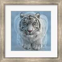 Framed White Tiger - Wild Intentions Square