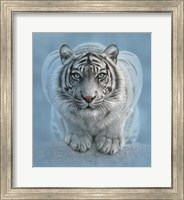 Framed White Tiger - Wild Intentions