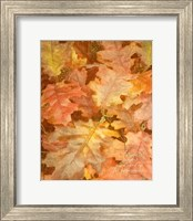 Framed Autumn Dressed Up