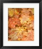 Framed Autumn Dressed Up