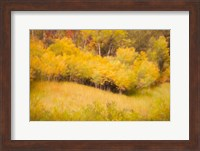 Framed Fall Thicket