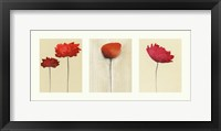 Framed Spring Triptych