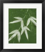 Framed Green Spa Bamboo I
