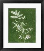 Framed Green Spa Bamboo III