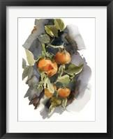 Framed Peaches I