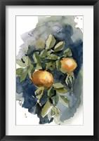 Framed Peaches II