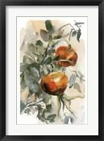 Framed Peaches III