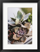 Framed Colorful Succulents