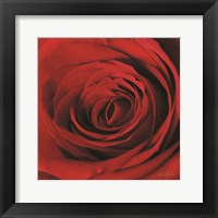 Framed Red Rose II