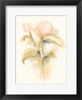 Framed Peach Peony