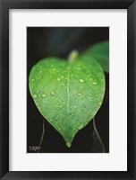 Framed Green Leaf