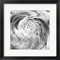 Framed Ranunculus Abstract II BW Light