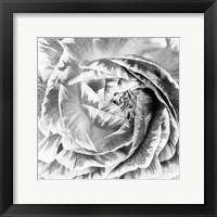 Framed Ranunculus Abstract IV BW Light