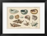 Framed Shell Etchings I