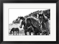 Framed Horses Three