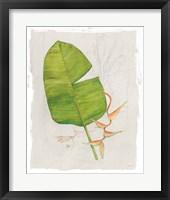 Framed Botanical Journal I Light