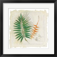 Framed Botanical Study II Light