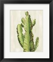 Framed Front Yard Cactus II