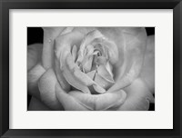 Framed Monochrome Flower 03