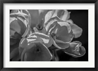 Framed Monochrome Flower 05
