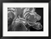 Framed Monochrome Flower 05
