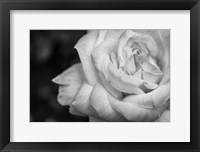 Framed Monochrome Flower 26