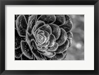 Framed Monochrome Flower 27