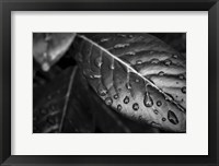 Framed Monochrome Flower 38