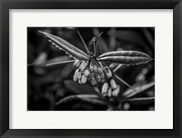 Framed Monochrome Flower 55