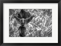 Framed Monochrome Flower 56