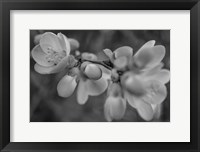 Framed Monochrome Flower 66