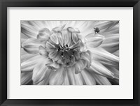Framed Monochrome Flower 78