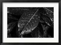 Framed Monochrome Flower 79