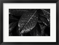 Framed Monochrome Flower 79
