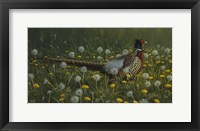 Framed Dandy Rooster - Formosan Ring-necked Pheasant