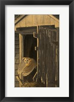 Framed Out of the Darkness - Barn Owl