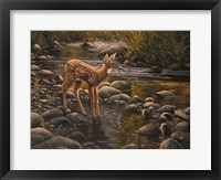 Framed Water's Edge - Fawn