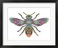 Framed Transverse Bee