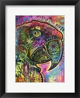 Framed Close Up Parrot