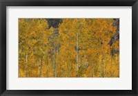 Framed Flames Of Autumn