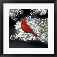 Framed Night Cardinal