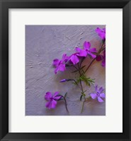 Framed Purple and Pink