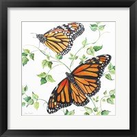 Framed Summertime Butterflies B