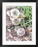 Framed Common Salsify Made Beautiful By Nature